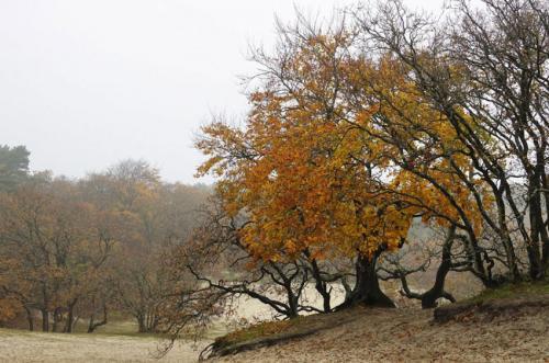 zandvlakte in de herfst