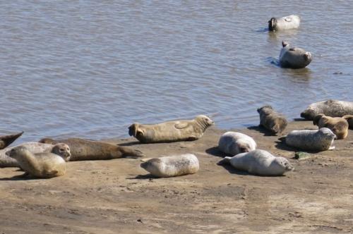 zeehondenkijkwand