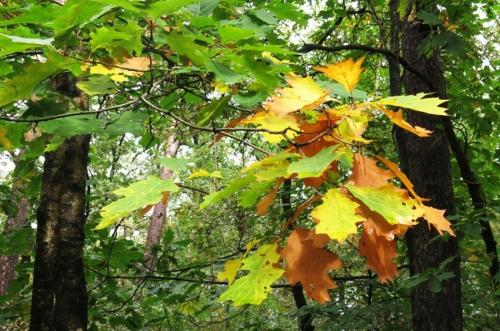verkleurd blad