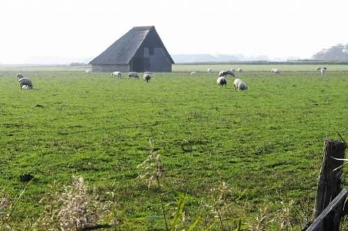 Texelse architectuur