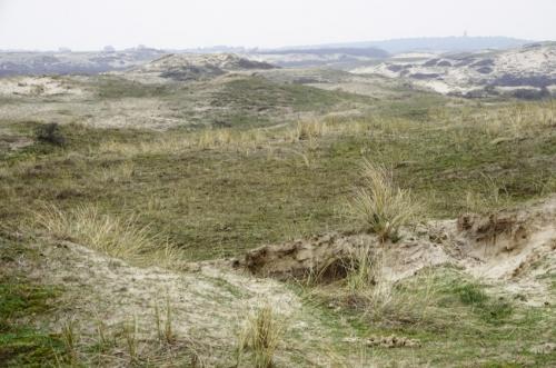 duinen tussen egmond en bergen