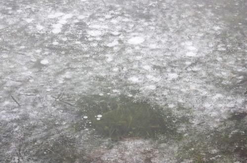 sporen in het ijs